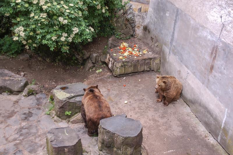 護城河裡的熊 1