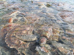 Cayman Turtle Farm