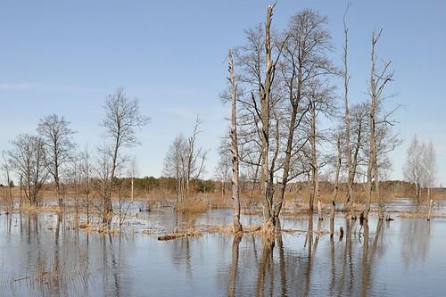 Flood / Вешние воды