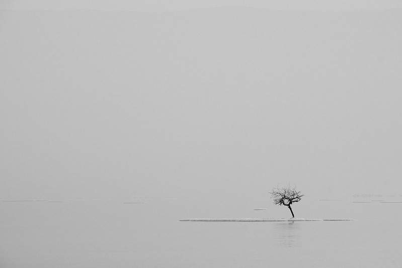 The lonely tree on the Dead Sea