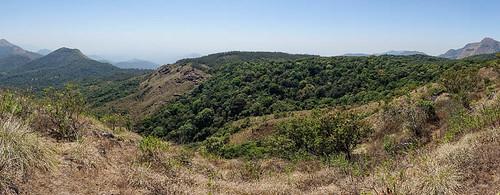 forêt montagnes végétation paysage kabbinakad karnataka inde ind
