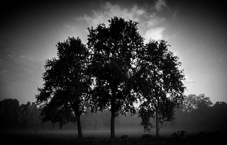 Three Trees - A Study | by alecompa