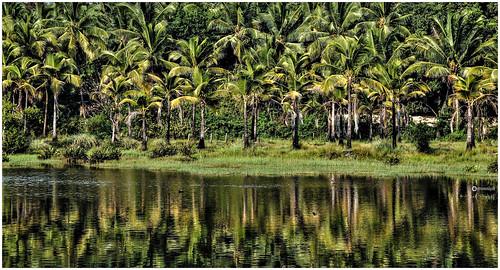 Backwaters, Bekal
