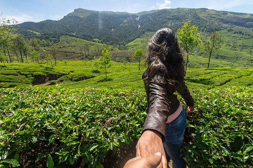 Beautiful tea estates of Munnar | by Trekpedition.Com