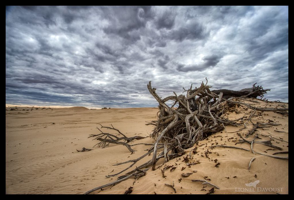 Driftwood in the desert