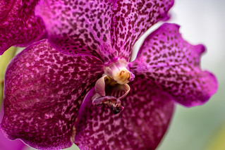 Kew Gardens Orchids-42 | by adambowie