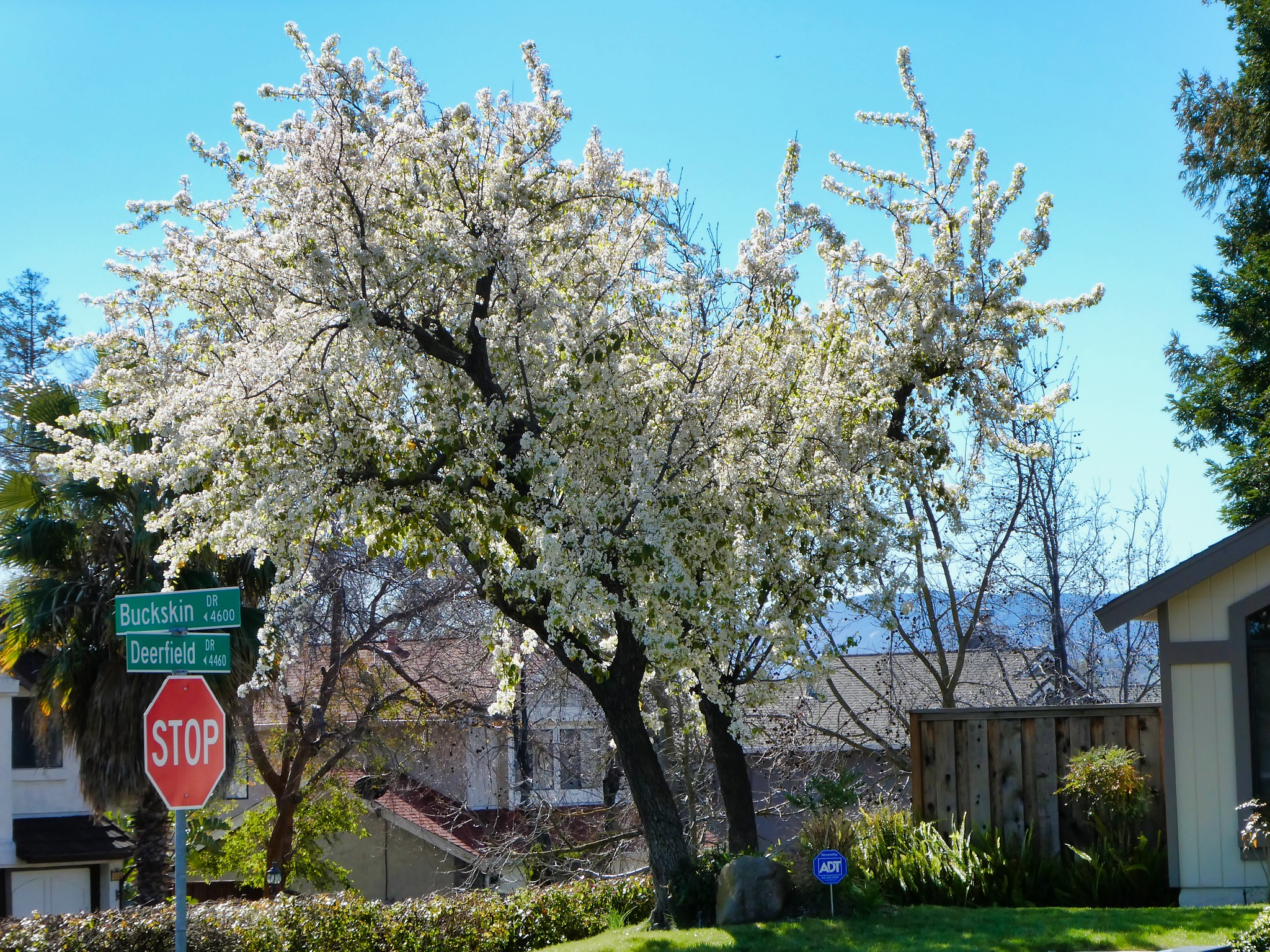 2019-02-18 - Nature Photography - Trees - Signs of Early Spring
