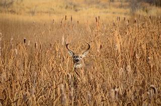 LaCreek National Wildlife Refuge