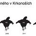 Pokud se všichni nebudeme společně snažit tetřívka zachránit, do roku 2040 u nás vyhyne, foto: Archiv Správy KRNAP