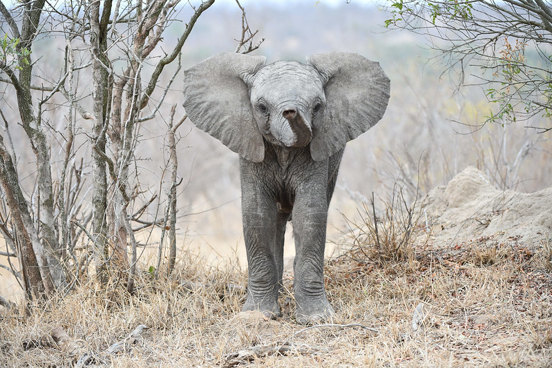 2282 Elephant