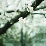 spring#002