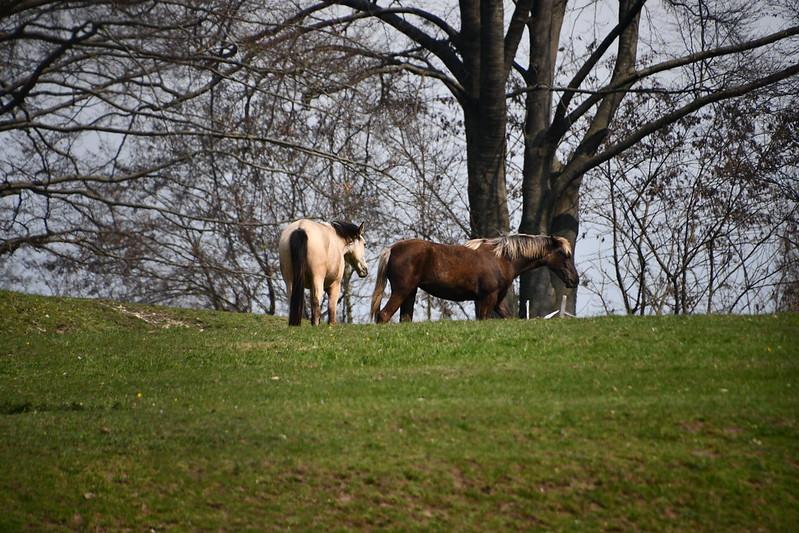 Horses 13.04 (1)