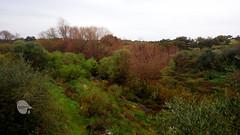 Guadiamar River