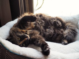 Cocoabean, Lazy Caturday