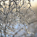 Winter's farewell:-) by mysza831