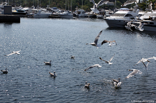 Seagulls | by libelle_journey