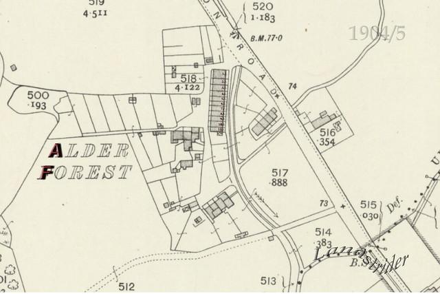 1904-5  - Alderforest