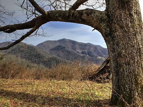 landscape haywoodcounty nc nature northcarolina vertical green moss rock woods forest roughcreekwatershed hiking trailrunning
