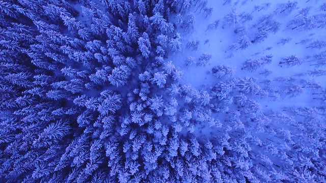 snowy trees, above, winter Royalty Free Stock Video Footage Download