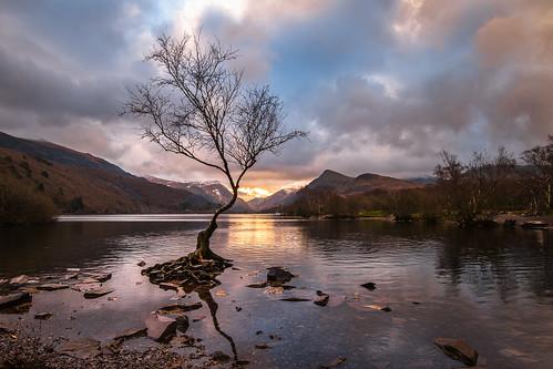 Llyn Padarn - Lone tree | by de_frakke