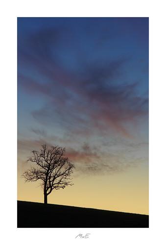 igworldglobalilovenatureigdivineshotsearthofficialearthshotzmarvelshotstheworldshotzdiscoverglobelandscapeloverlandscapehunter tree silhouette horizon sky red orange rot blue blau sunset sonnenuntergang afterglow niefern öschelbronn niefernöschelbronn badenwuerttemberg badenwürttemberg germany deutschland february februar 2019
