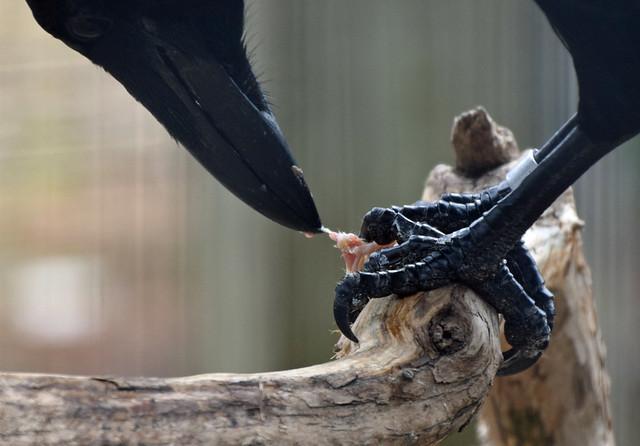 Raven Chow