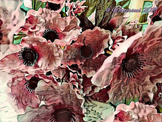 poppies, pink......2019-04-09