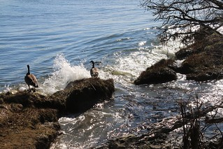 Waves and Geese
