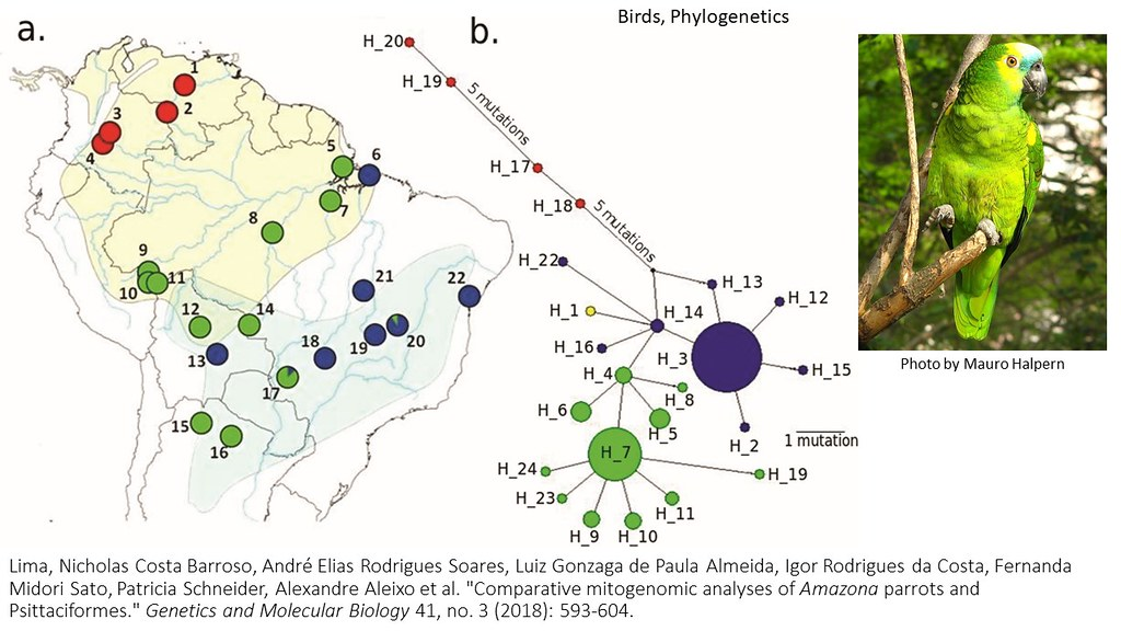 Lima et al. 2018 - Comparative mitogenomics of Amazona parrots