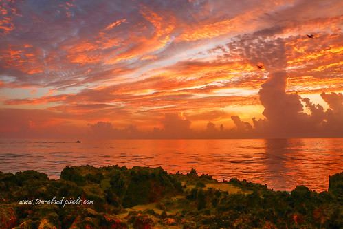 sun sunrise morning dawn clouds cloudy weather horizon rocks sea seashore coast coastline landscape seascape nature mothernature ocean fiery hutchinsonisland stuart florida