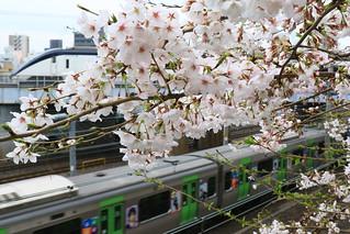 E235系と桜