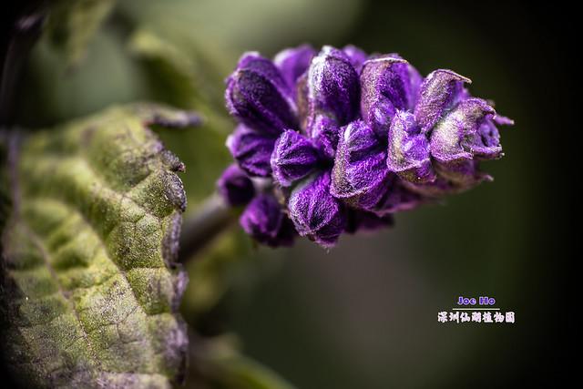 2019年04月07日 - 深圳仙湖