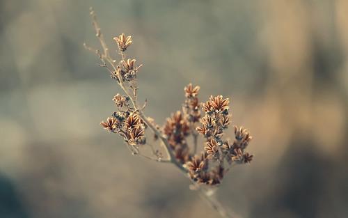 nature plant flowers light shadows dof life depthoffield canon t5i 700d colors bokeh