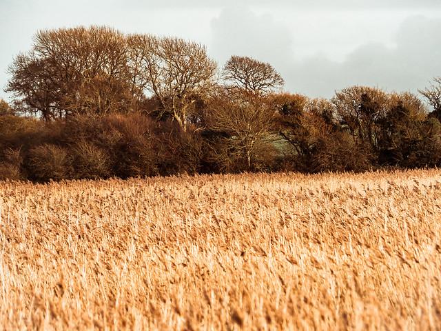 Yarmouths fields
