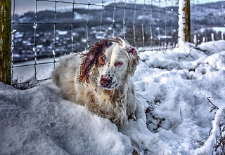 Rupert in the Snow   by Missy Jussy