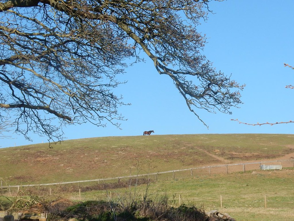 Horse on a hill Wanborough to Godalming