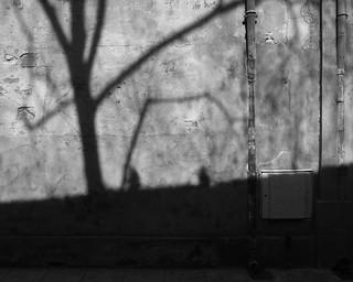 Shadow on Old Wall