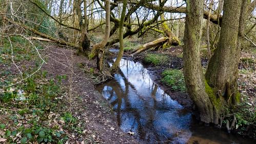 Berry brook, Northycote Farm