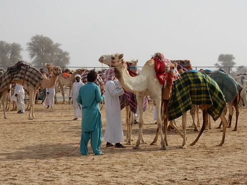 Al Marmoom Camel Racing Track - 16
