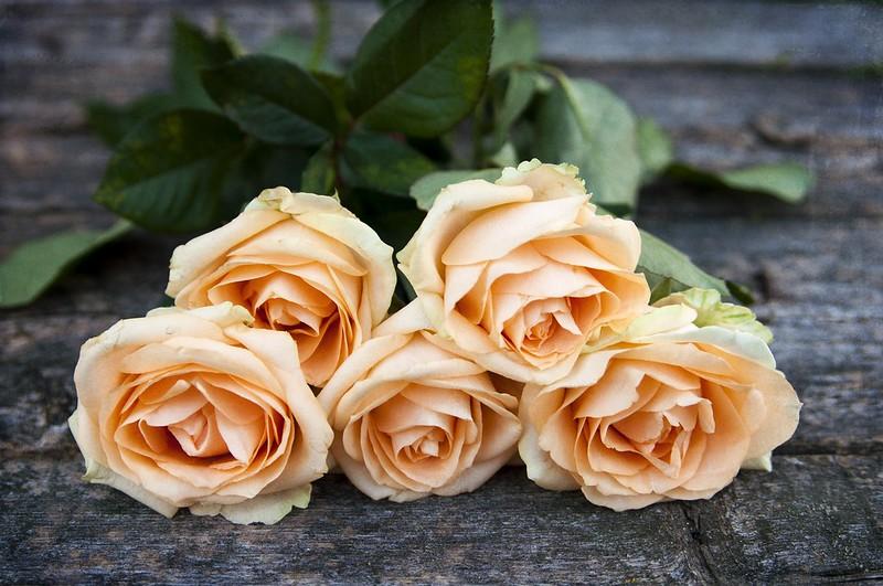 Обои розы, букет, бутоны картинки на рабочий стол, раздел цветы - скачать