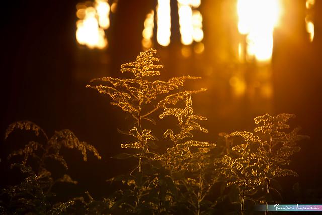 Dim Light of Sunset *A Beautiful Nature*