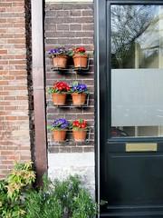 Flower Pots 01