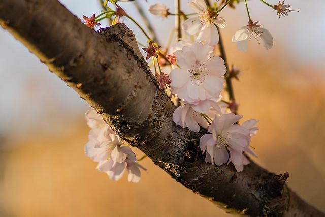 everything blooms
