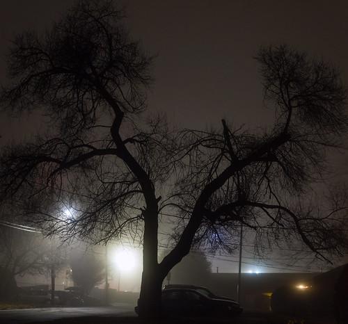 Tree at night in fog | by cizauskas