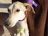 Festival International du Sahara: berberský pes sluga, foto: Petr Nejedlý