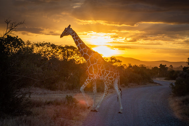 Sunset in Kenya, Africa