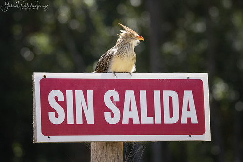 SIN SALIDA (NO EXIT) | by Gabriel Paladino Photography