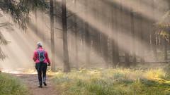 forrest mist