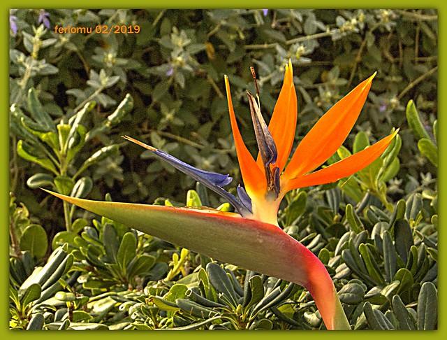 Benalmádena 04 flor