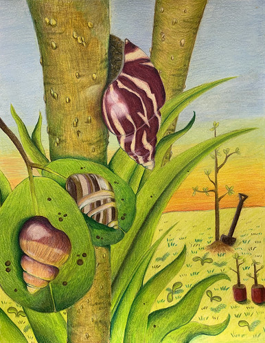 Oahu Tree Snails | by Endangered Species Coalition